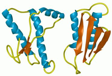 Ribbon representation of a protein in its normal (left) and prion (right) forms